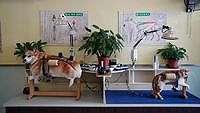 China Punya Akupuntur Khusus Anjing & Kucing, Seperti Apa Ya?